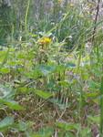 Fleur (1)